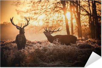 Zelfklevende Poster Red Deer in de ochtend zon.