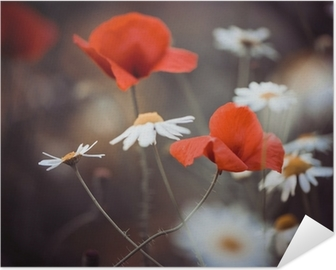 Zelfklevende Poster Rode papaver bloemen en wilde madeliefjes