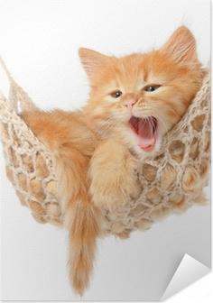 Zelfklevende Poster Schattige roodharige kitten in hangmat