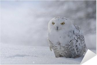 Zelfklevende Poster Sneeuwuil zitten in de sneeuw