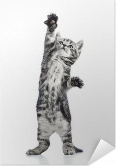 Zelfklevende Poster Speelse kitten kat geïsoleerd op wit
