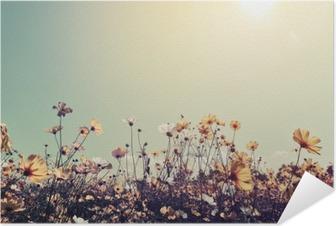 Zelfklevende Poster Vintage landschap natuur achtergrond van mooie kosmos bloem veld op hemel met zonlicht. retro kleurtoon filter effect