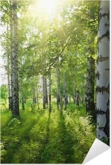Zelfklevende Poster Zomer berkenbossen met zon