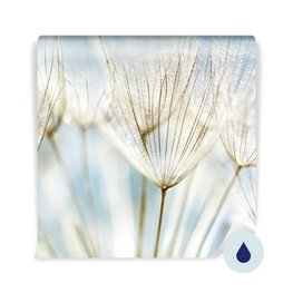 Wall Mural Bathroom - Abstract dandelion flower background