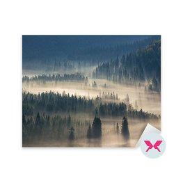 Dekorer - Träd på en äng nedför viljan till barrskog i dimmiga berg
