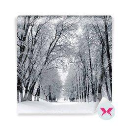 Fototapeta - Zimní krajina