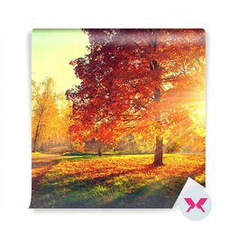 Fototapeta - Les na podzim