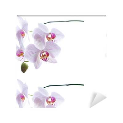 Papier peint à motifs Fond de neige orchidées blanches isolé • Pixers® - Nous vivons pour changer