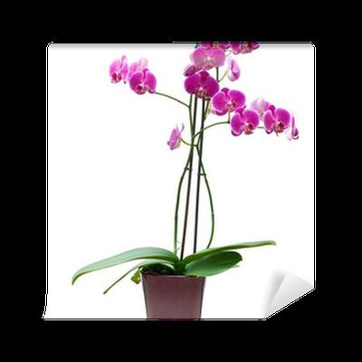 Papier peint à motifs Plante à fleur en pot orchidée rose isolé fond blanc - détouré • Pixers ...