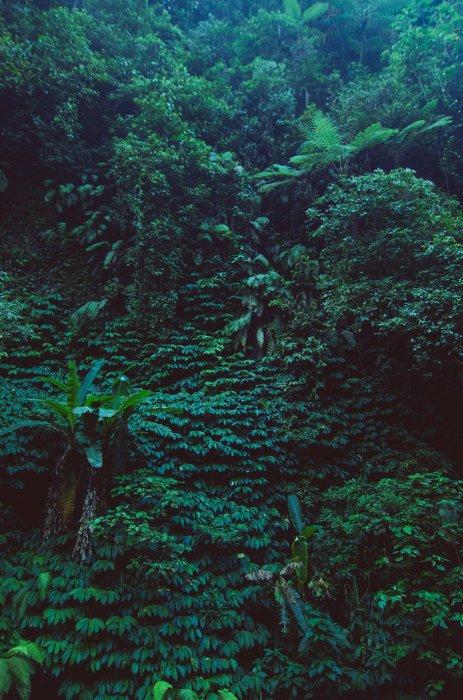 Kendinden Yapışkanlı Duvar Resmi tropikal yağmur ormanı -