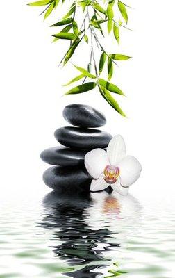 Nálepka na Stěny Bílá orchidej květina konec bambus