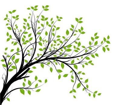 Vektori setti - vihreä koriste haara ja lehdet Seinätarra