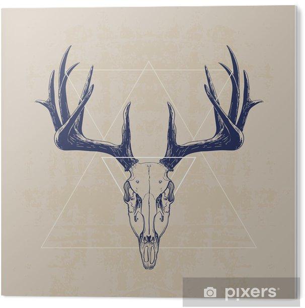 deer skull Acrylic Print - Mammals