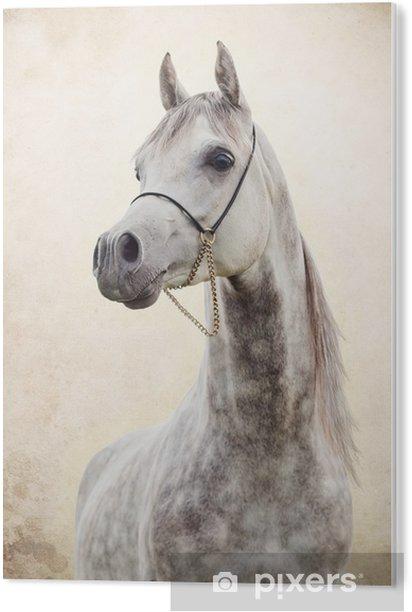 portrait of gray beautiful arabian stallion at art background Acrylic Print - Themes