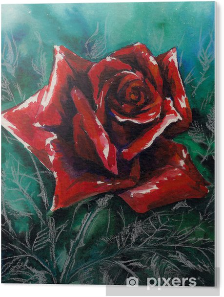 Red rose watercolor painted Acrylic Print - Themes