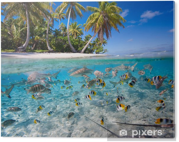 Tropical island Acrylic Print - Fishes