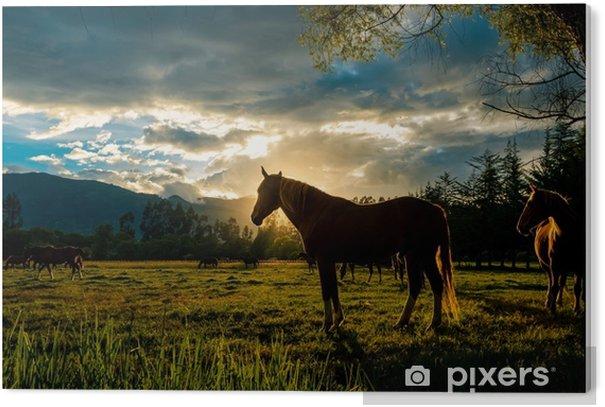 Auringonlaskuhevonen Akryylitaulu - Maisemat