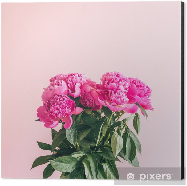 a bouquet of lovely peonies on a pink background. Aluminium Print (Dibond) - Plants and Flowers
