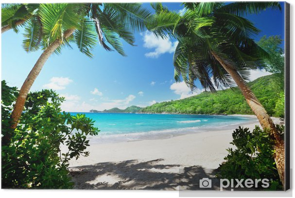 beach, Mahe island, Seychelles Aluminium Print (Dibond) - Palm trees