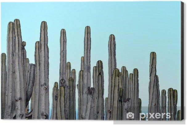 Cacti Color Photography Aluminium Print (Dibond) - Plants and Flowers