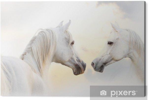 Aluminium Print Arabische wit paard - Thema's
