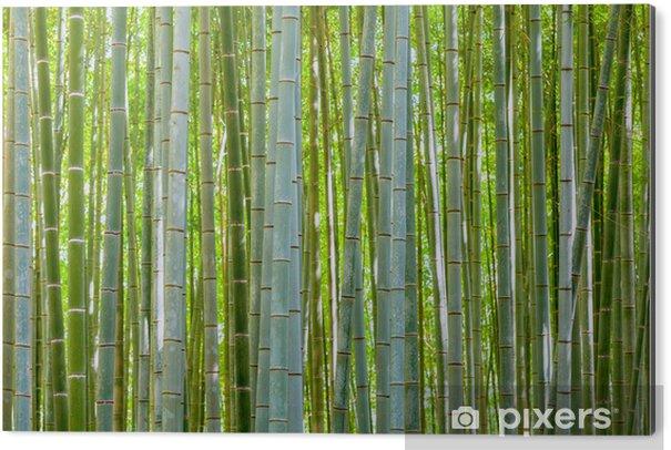 Aluminium Print Bamboe achtergrond in de natuur op dag - Bomen