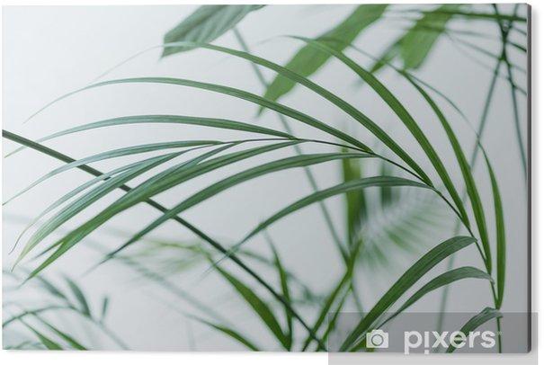 Aluminiumtavla Närbild av gröna palmbladen på suddig grå bakgrund - Växter & blommor