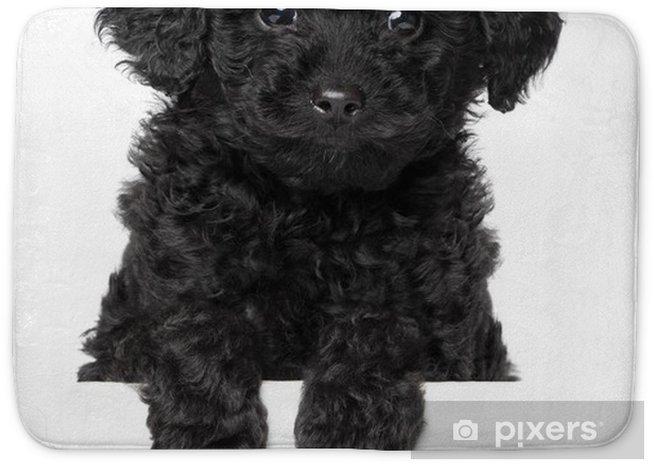 Black Toy poodle puppy Bath Mat