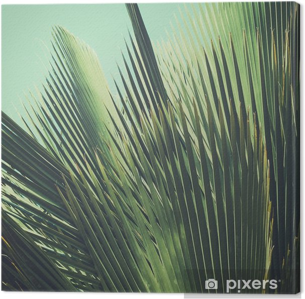 Canvas Abstracte tropische vintage achtergrond. Palmbladeren in zonlicht. - Bloemen en Planten