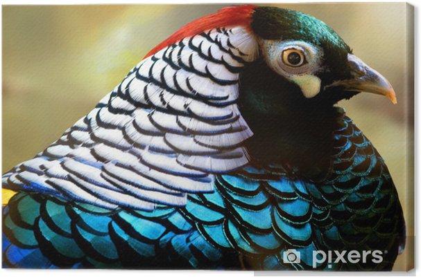 Canvas Blauw fazant - Vogels