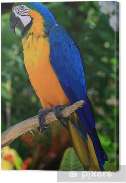 Verrassend Canvas Blauwe en gele tropische papegaai in de jungle, Caraibes RX-08