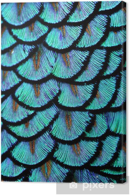 Canvas Blauwe veren - Dieren