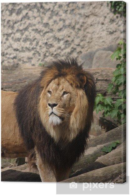 Canvas Close-up van een leeuw - Thema's