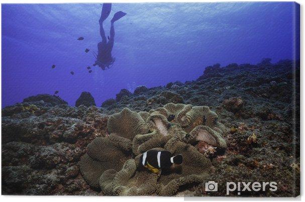 Canvas Clownvissen - Onderwater