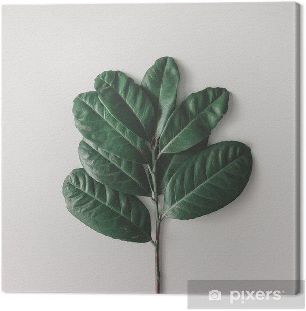 Canvas Creatieve minimale opstelling van bladeren op heldere witte achtergrond. plat leggen. natuur concept. - Bloemen en Planten