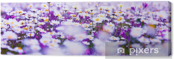 Canvas Daisy veld - Thema's