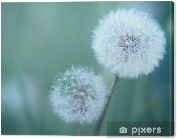 Canvas Dandelions - Thema's