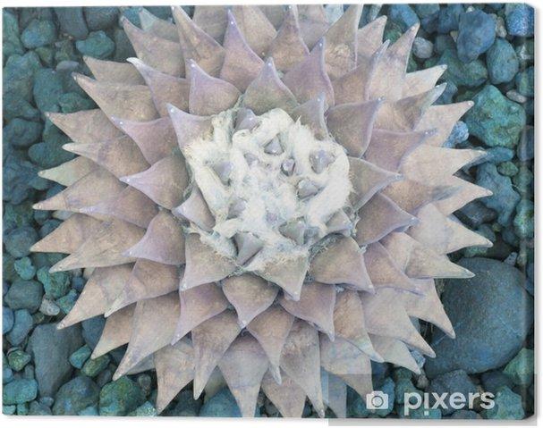 Canvas De diamant oppervlak van de vijver - Bloemen en Planten