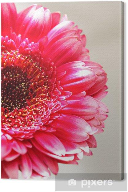 Canvas De roze Gerber close-up - Seizoenen