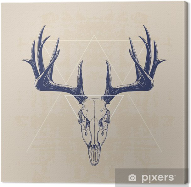Canvas deer skull - Zoogdieren