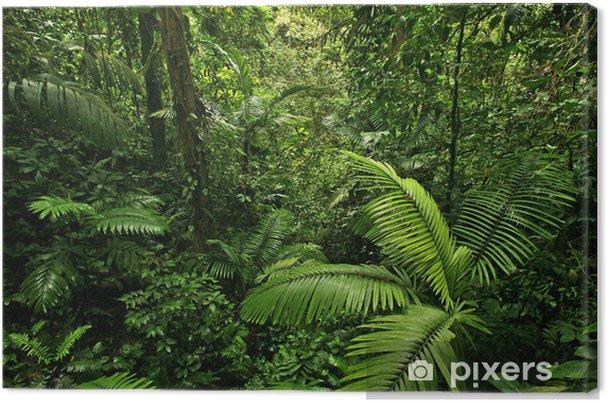 Canvas Dichte Tropisch Regenwoud - Bestemmingen