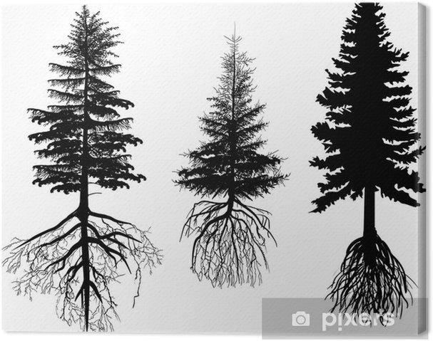 Canvas Drie sparren met wortels op wit wordt geïsoleerd - Bomen