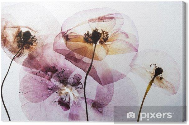 Canvas Droge klaprozen - Bloemen en Planten