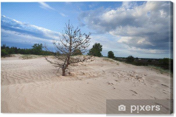 Canvas Droge pijnboom op zandduin - Hemel