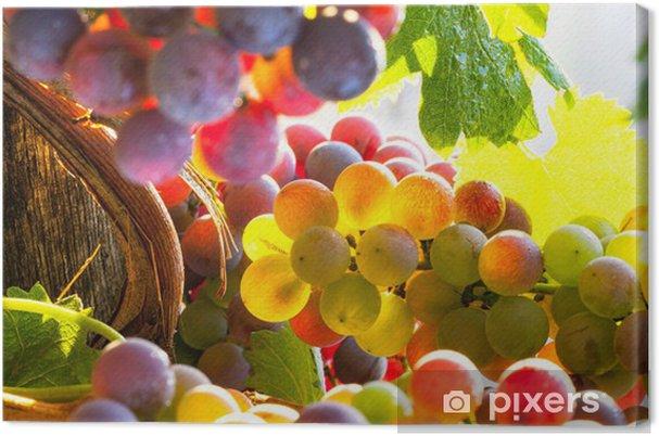 Canvas Druiven regenboog - iStaging