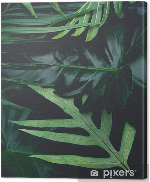 Canvas Echte bladeren met witte kopie ruimte background.tropical botanische natuur conceptontwerp. - Grafische Bronnen