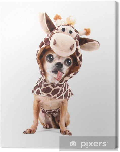 Canvas Een schattige chihuahua in een kostuum - Zoogdieren