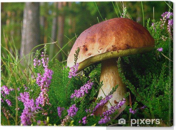 Canvas Eetbare paddestoel - eekhoorntjesbrood met bloeiende heide - Heide