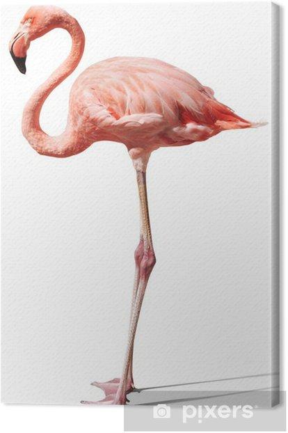 Canvas Flamingo op wit - Muursticker