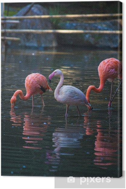 Canvas Flamingo - Wonderen der Natuur